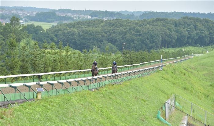 Northern Farm 일본중앙경마 미호, 릿토 경주마 조교 센터의 비밀과 종마목장