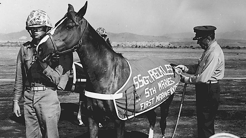 Sgt Reckless 1024x576 서울 실내승마장에서 한국전쟁 영웅 군마 '레클리스(Reckless) 1953' 공연