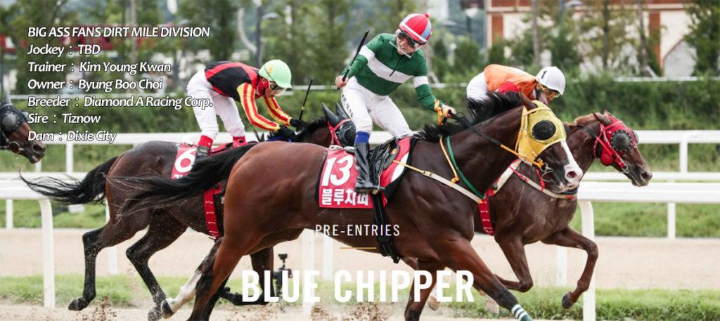 blue chipper breeders cup 1024x457 미국경마대회 브리더스컵 더트마일 출전 블루치퍼 산타아니타 도착