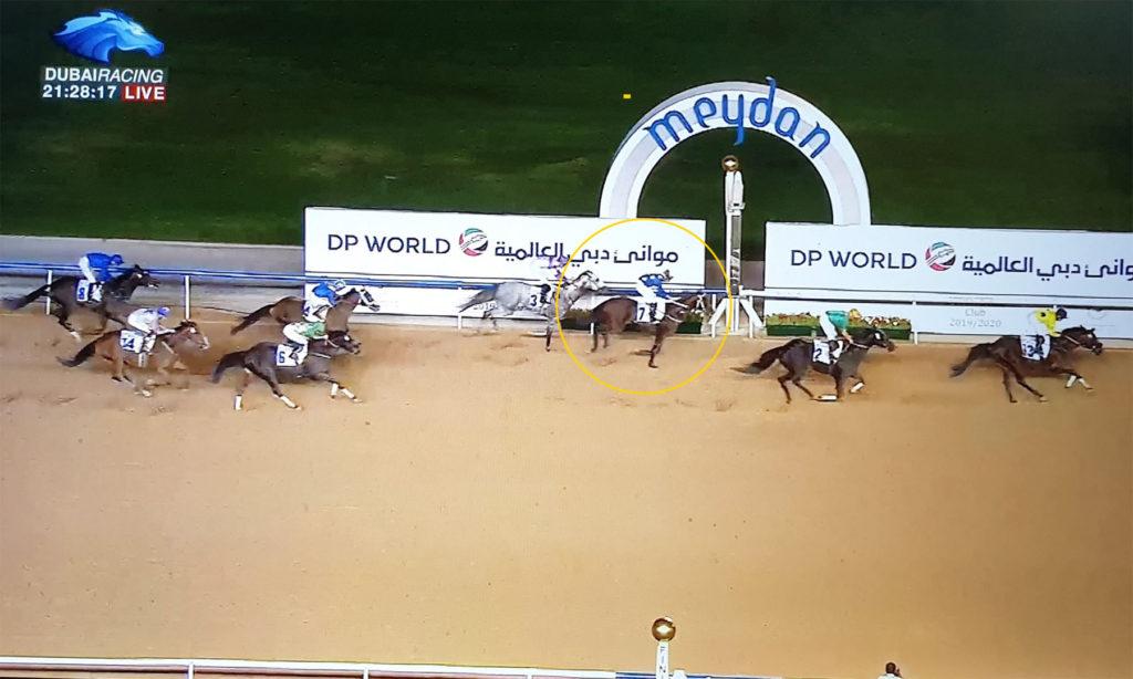 두바이월드컵 그레이트킹 1024x614 두바이월드컵 카니발 Jebel Ali Port 핸디캡 한국의 그레이트킹 3착 선전