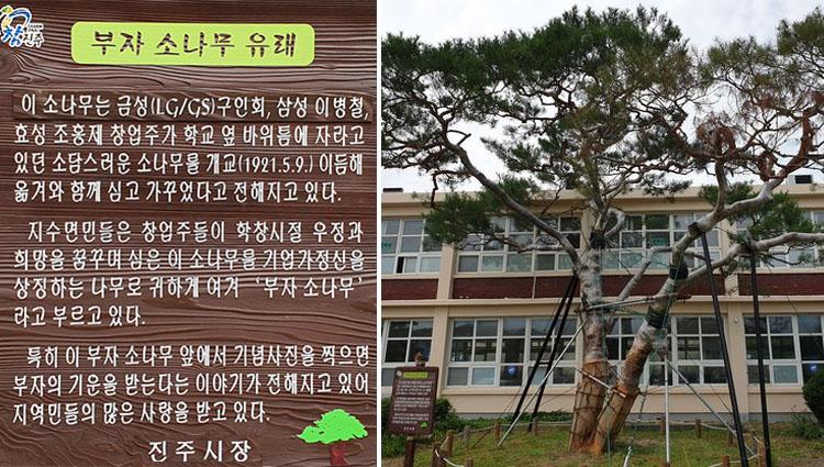 지수 부자소나무 유래 진주시 대박 포토스팟, 삼성 LG 재벌 회장이 심은 지수초등학교 부자 소나무
