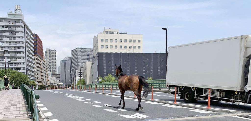 경주마 방마사고 도쿄 오오이경마장 유도마 탈출 방마사고! 교차로에서 차량과 충돌