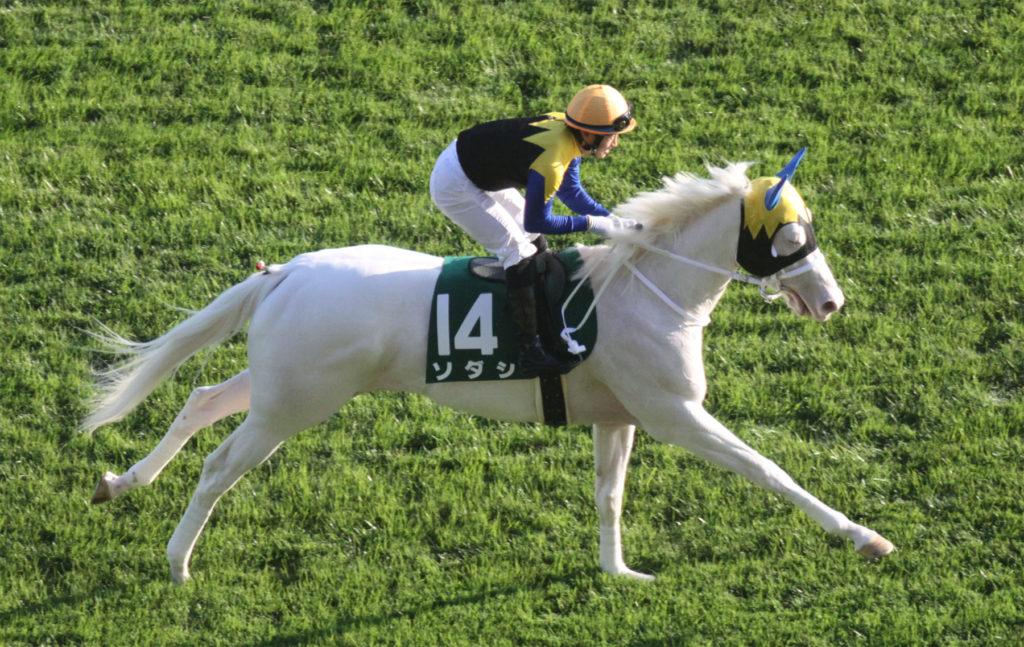 sodashi white horse 1024x647 일본 도쿄경마장 아르테미스 스테익스(Artemis Stakes) 백마 소다시(Sodashi) 3연승