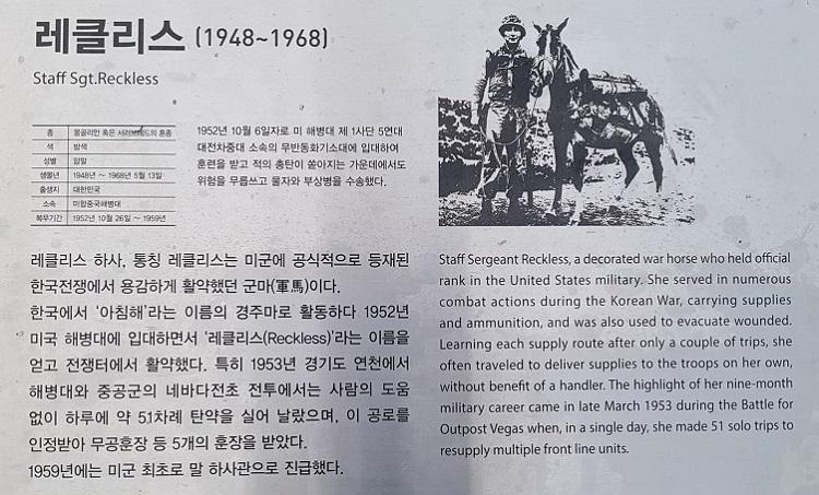 연천 레클리스 서울 실내승마장에서 한국전쟁 영웅 군마 '레클리스(Reckless) 1953' 공연