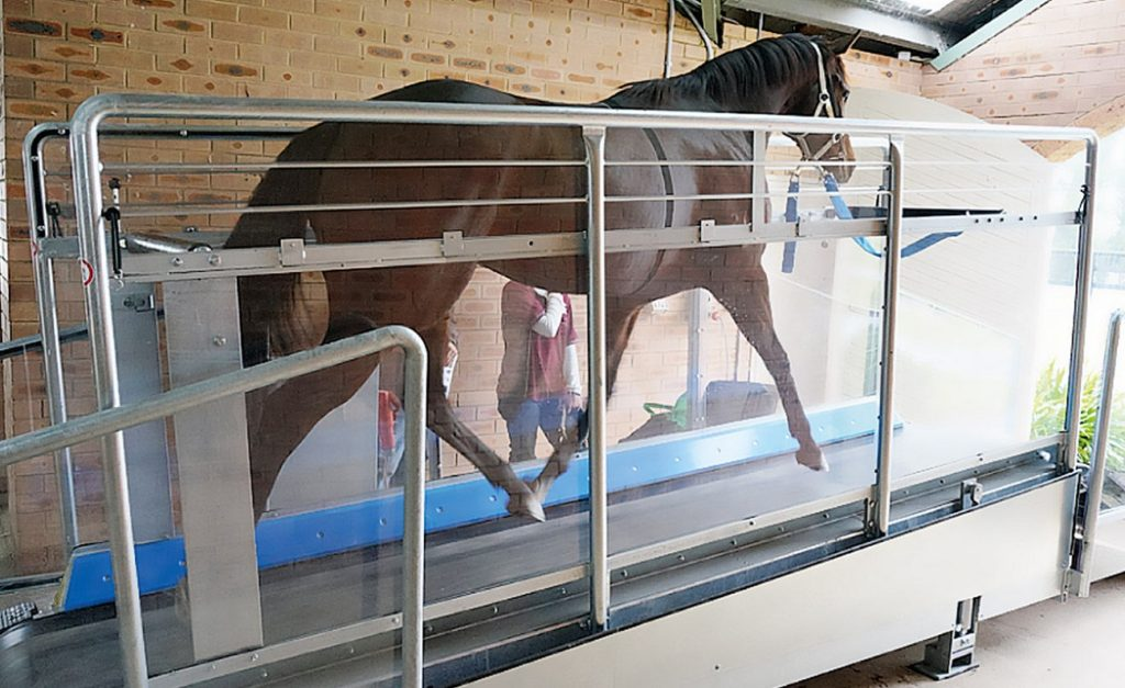 horse treadmill 1024x627 호주 빅토리아더비 우승 경주마 홍콩에서 워킹머신(트레드밀) 사고로 안락사