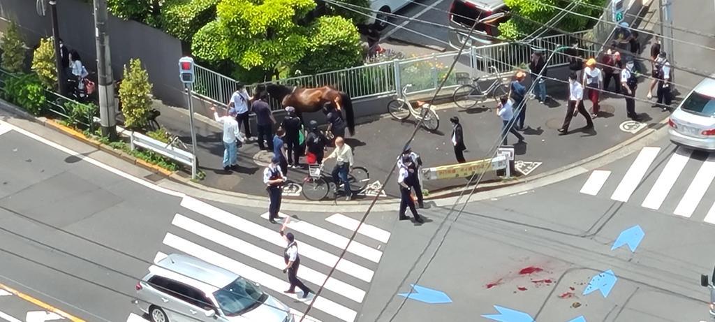 말과 차량충돌사고 도쿄 오오이경마장 유도마 탈출 방마사고! 교차로에서 차량과 충돌