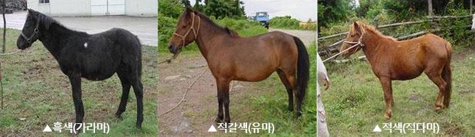 말털색깔 경주마, 말의 털색(모색) 종류는?