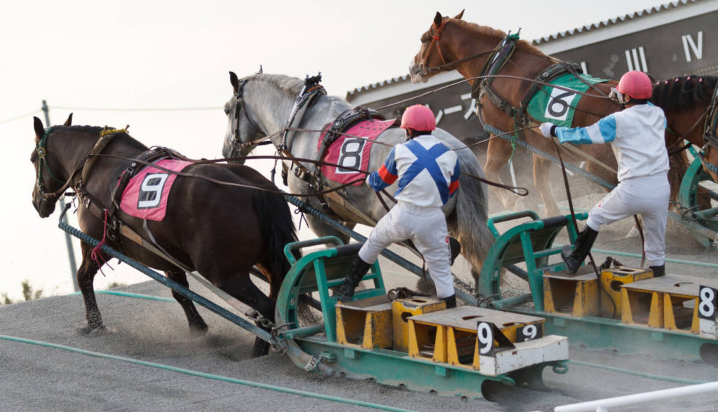 오비히로 반에이경마 1024x588 일본 오비히로 반에이경마 기수가 경주마 얼굴을 발로 차.. 동물 학대 논란