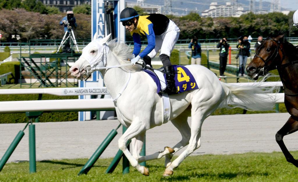 SODASHI OKASHO 1024x625 일본경마 백마 소다시 무패의 5연승으로 클래식 G1 오카쇼(桜花賞) 제패